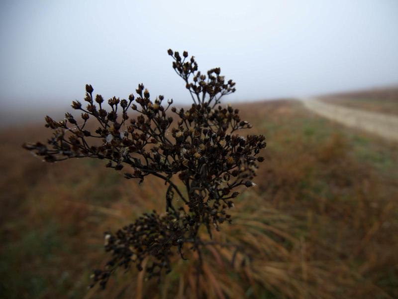 In Kansas Kann Das Leicht Den Flint Hills Geschehen Eine Art Mittellandschaft Im Suden Zu Feucht Fur Wuste Trocken Einen Wald